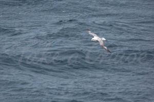 At-Sea-6-watermark