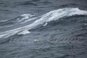 At-Sea-7-watermark